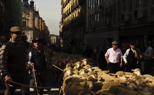 ovce-v-madride3_tasrap.jpg