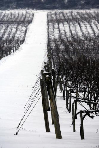 tokajske-vinohrady3_sme.jpg