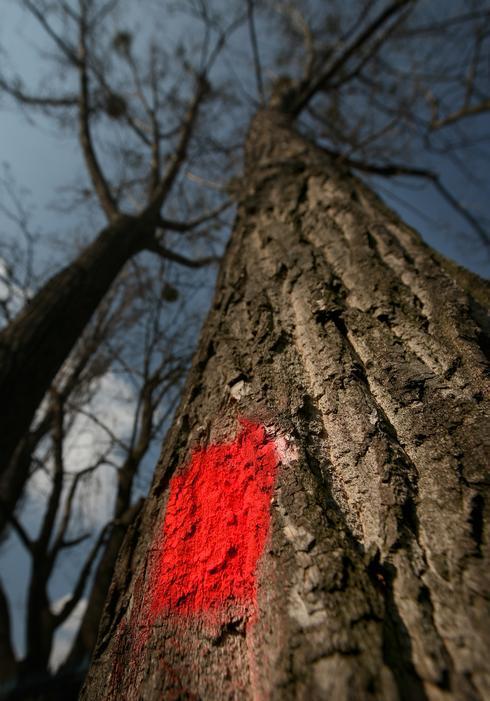 sm-0309-028c-strom.rw_res.jpg