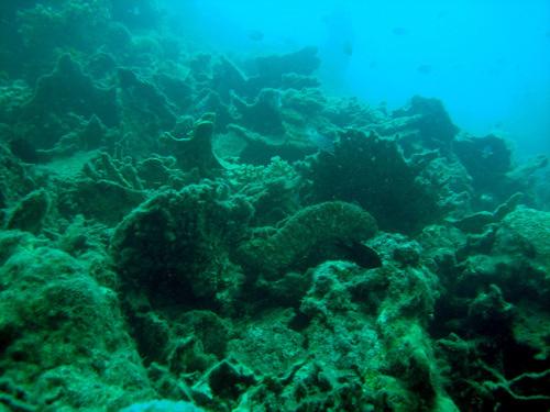koralovy_utes_mrtvy_web.jpg
