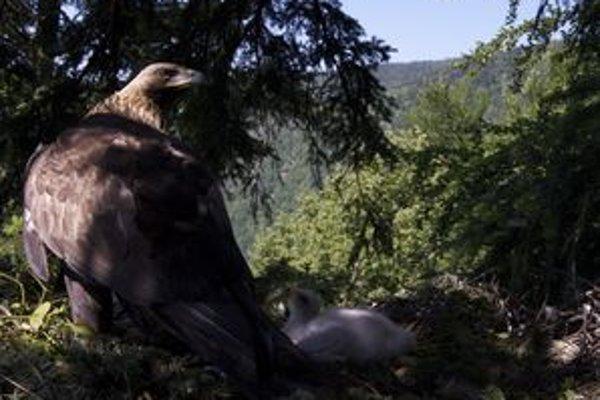 Orly v hniezde sníma kamera a môžete vidieť, čo práve teraz robia.