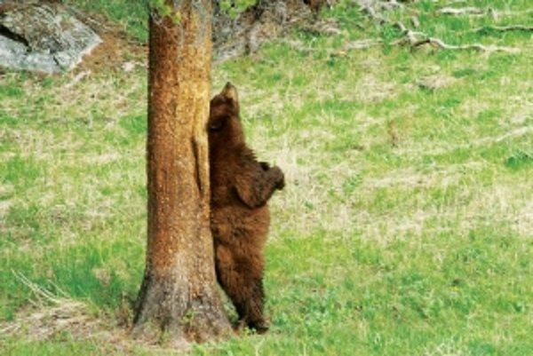 Ak niečo svrbí medveďa, pomôžu mu stromy. Ľuďom môžu pomôcť lieky, zacielené na novoobjavenú signálnu dráhu.