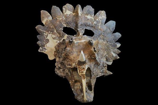 nature-triceratops-slideshow-1_res.jpg