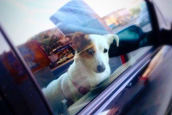 Pes môže počas leta skolabovať v priebehu niekoľkých minút.