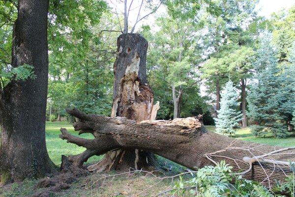 Padnutý strom.