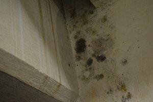 V prevádzkach sa vytvorila pleseň na stenách.