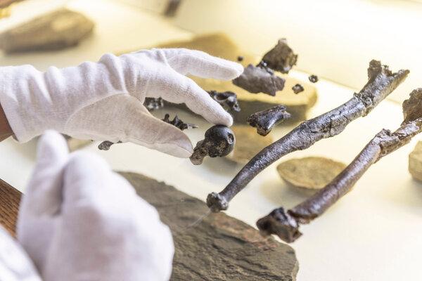 Nálezy skamenelín štyroch jedincov spochybňujú doterajšie poznatky ohľadom evolúcie veľkých ľudoopov a ľudí.