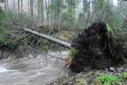 Ždiar, popadané stromy