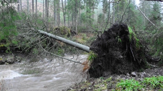 Silný vietor v Ždiari váľal stromy, bral strechy (video)