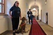Do múzea sa dá prísť aj s vodiacim psom.