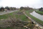 Na nábreží vypílili šesť stromov. Boli už v zlom stave.