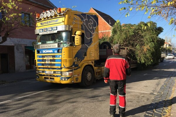 Z minuloročného prevozu stromu na námestie.