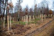 Výsadba stromov na Zochovej chate.