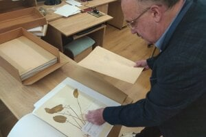 Riaditeľ botanickej záhrady ukazuje jednu z položiek herbára.