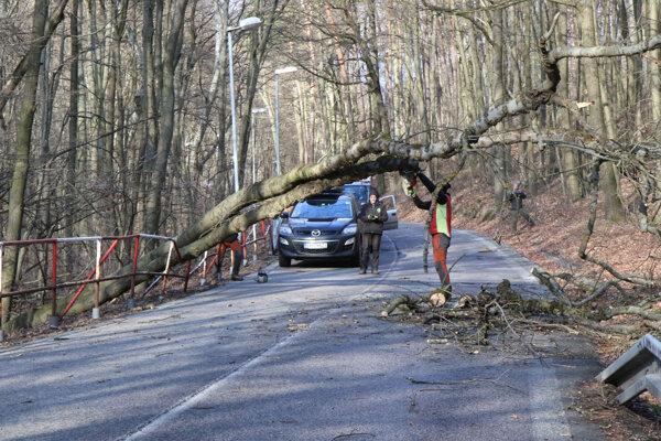 Odstraňovanie spadnutého stromu na bratislavskej Kolibe.