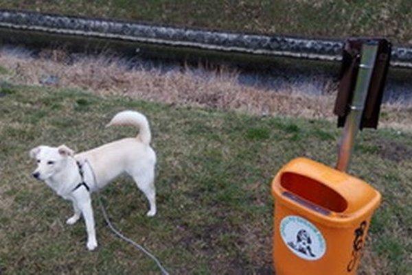 V Trnave je zaregistrovaných viac ako 4 tisíc psov.