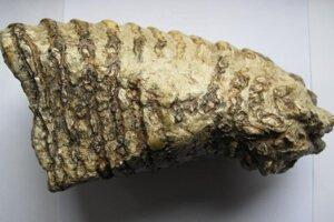 Zub mamuta, ktorý sa našiel v Ponickej jaskyni