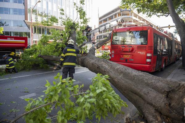 Na trolejbus spadol strom.