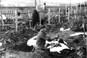 Exhumácie padlých vojakov v roku 1950.