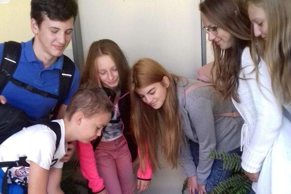 Počas bežného školského vyučovania sa o dážďovkový kompostér starajú aj žiaci.