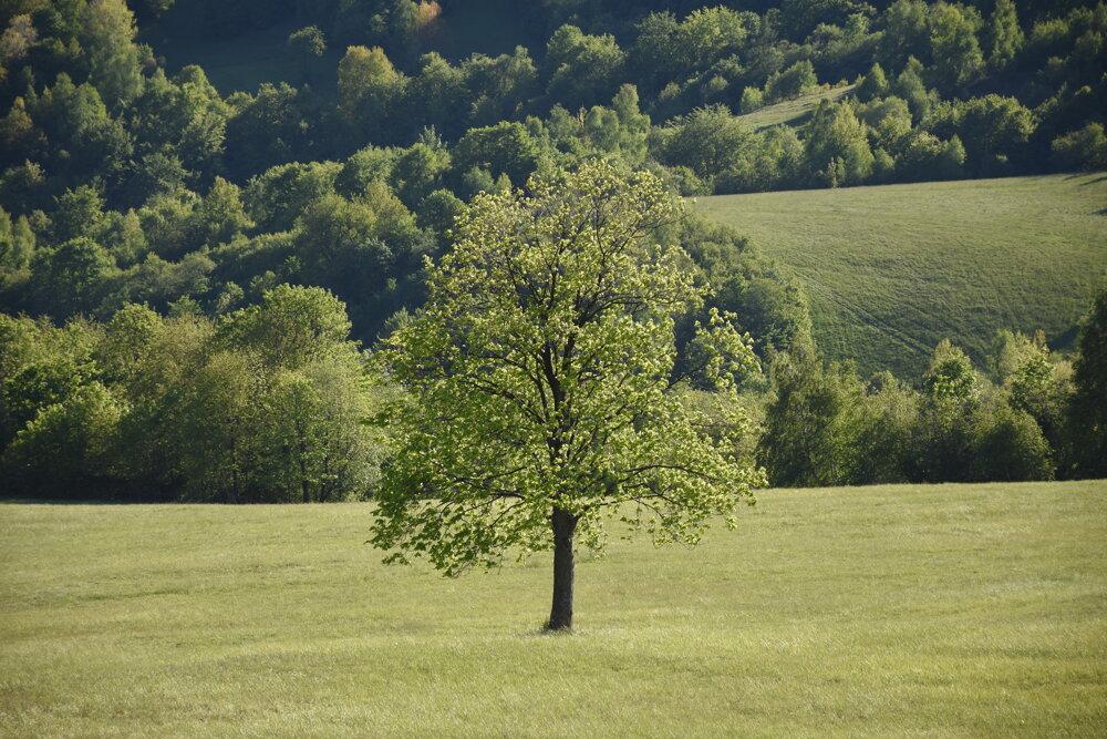 Lúka v okolí obce Ruský Potok.