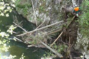 Popadané stromy v rieke Hornád.