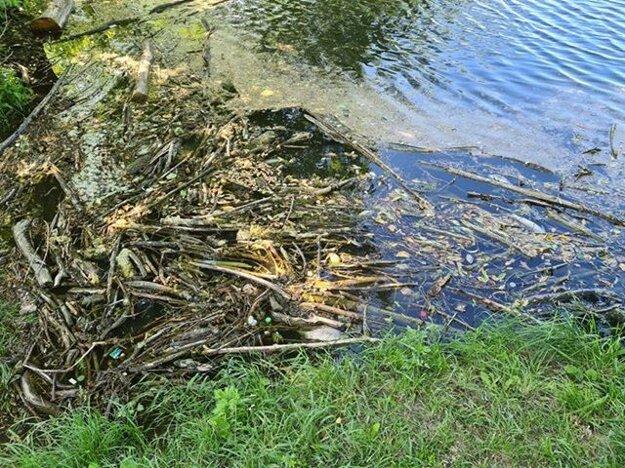 Takto to vyzeralo v rybníku. Na hladine bolo niekoľko uhynutých rýb.