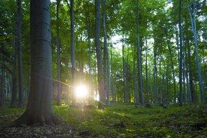 Poloniny bukový prales