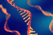 Ilustrácia ribonukleovej kyseliny (RNA).