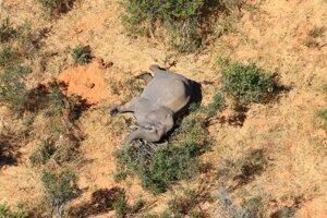 Hoci slony v Afrike ohrozuje pytliactvo, v tomto prípade ho vylúčili.