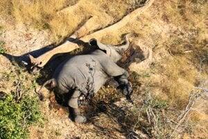 Celkový počet mŕtvych slonov môže byť ešte vyšší, pretože nemuseli nájsť všetky.