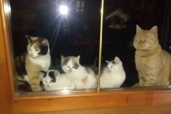 Rodina sa starala o zvieratá s láskou, mačky nechali vykastrovať.