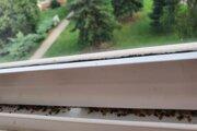 Obyvateľka Kuzmányho sídliska musí bzdochy denne odstraňovať z balkóna.