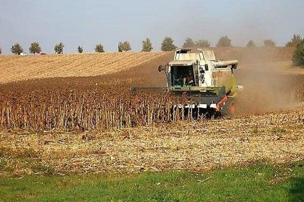 ⋌PDD Prašice – Jacovce už zožalo pšenicu, jačmeň, repku olejnú ihrach. Na poli má ešte kukuricu acukrovú repu slucernou.