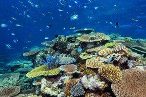 Ilustračná fotografia. Podľa novej štúdie za posledné štvrťstoročie odumrela polovica koralov vo Veľkej koralovej bariére.
