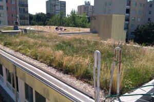 Vegetačné strechy znižujú teplotu aj pomáhajú zadržiavať vodu.