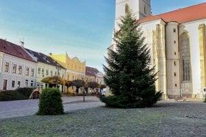 Prešovský vianočný stromček stojí pri Konkatedrále svätého Mikuláša.