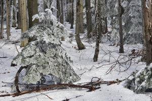 Zimu v nižších polohách suplovala pomaly už jarná atmosféra.