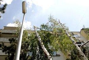 Dvojkmeňovú brezu miestny obyvateľ bez povolenia pripravil o množstvo konárov aj vrcholy.