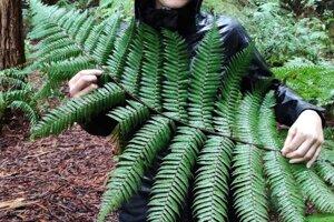 Strieborná papraď (silver fern) je symbolom Nového Zélandu.