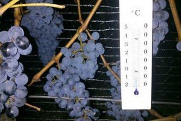 Ľadové víno sa túto zimu podarilo zozberať len minimu výrobcov.