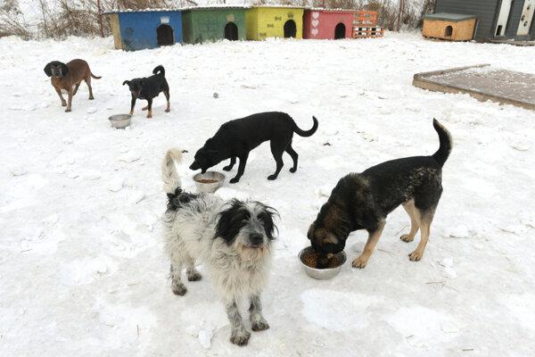 Od začiatku tohto roka je útulok v Košiciach pre verejnosť dočasne zatvorený.