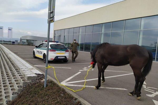Policajti naháňali na ceste I/9 splašeného koňa, zahnali ho na parkovisko.