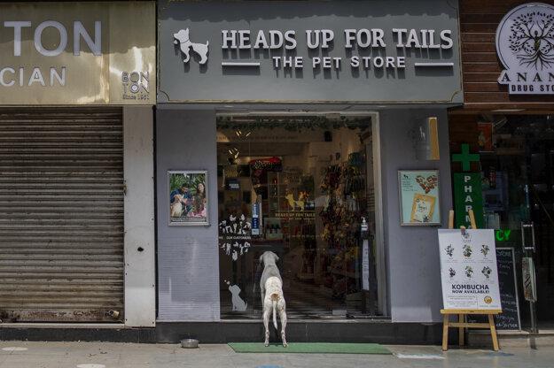 Pes stojí pred obchodom s tovarom pre zvieratá na prázdnej ulici v  indickej metropole Naí Dillí počas víkendového lockdownu.
