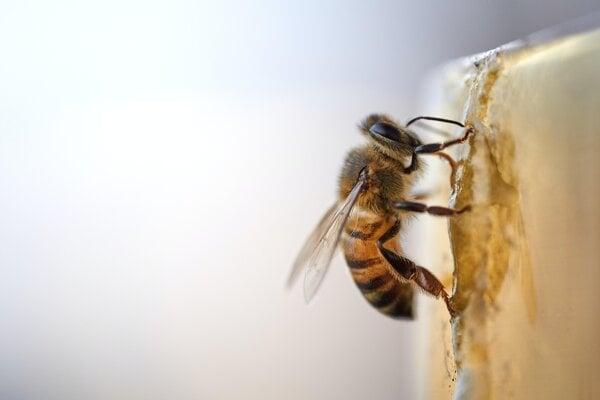 Včely začali pred pozitívnou vzorkou na covid vyťahovať cuciaky.