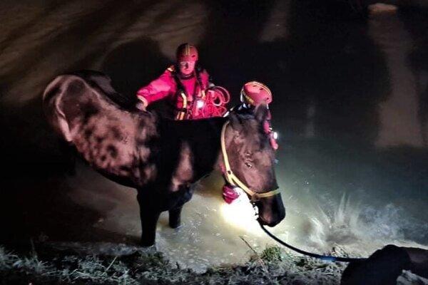 Záchrana koňa z Hornádu.