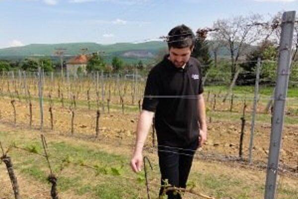 Časť vinohradov nechajú Vinárske závody v Topoľčiankach na ľadový zber.