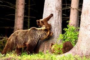 Po tragédii na Liptove ľudia pozorne sledujú informácie o výskyte medveďov.