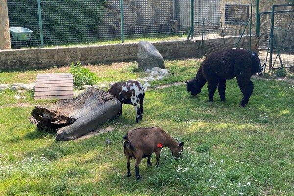 Zvieratá v parku.