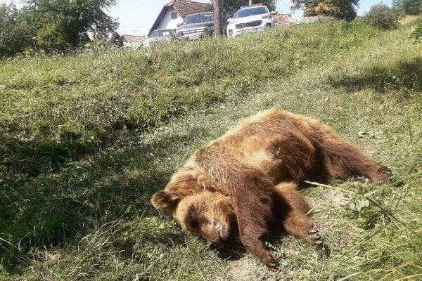Mŕtva medvedica v Ivinách.